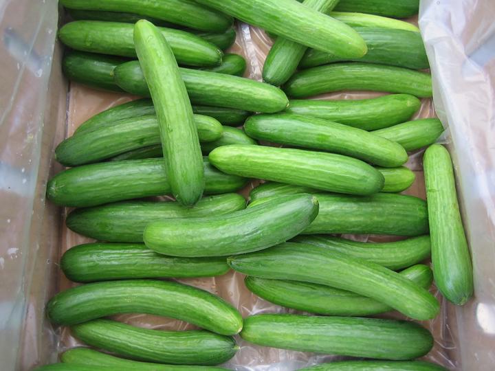 http://summertomato.com/wp-content/uploads/2009/03/mediterranean-cucumbers.jpg