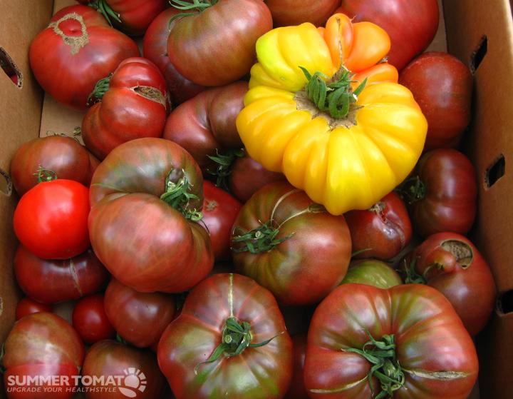 yellow heirloom tomatoes - photo #25