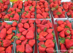 Huge Strawberries