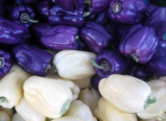 Purple & White Peppers