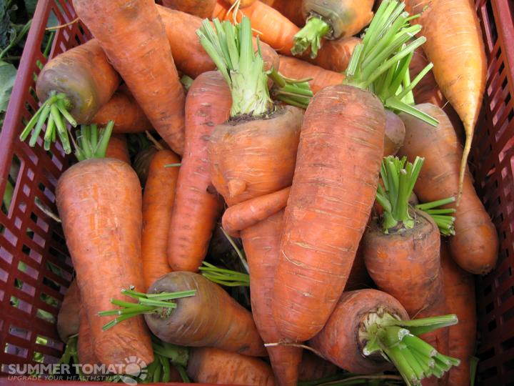 - chantenay-carrots