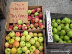 Early McIntosh Apples