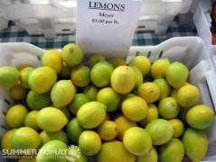 First Meyer Lemons