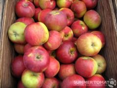 Black Twig Apples