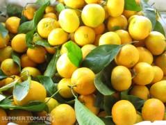 Early Mandarins