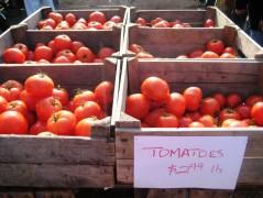 Winter Tomatoes