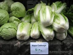 Napa Cabbage $1