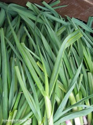 Flat Garlic Leaves