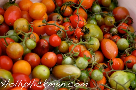 Tomatoes from Margie's stand