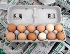 Marin Sun Farms Eggs