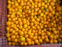 First Kumquats
