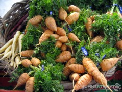 Thumbalina Carrots