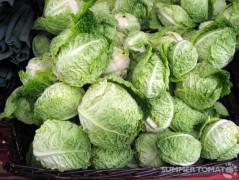 Baby Savoy Cabbage