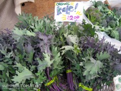 Organic Purple Kale