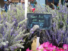 Lavendar and Sweet Peas