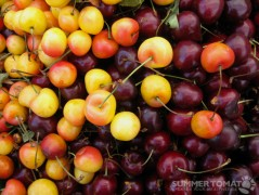Rainier & Bing Cherries
