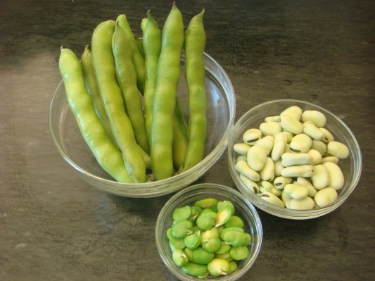 Favas unshelled, shelled and skinned