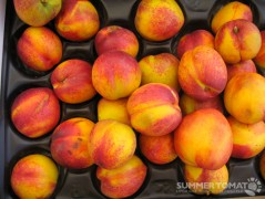 Frog Hollow Ruby Grand Nectarines