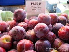Yummy Rosa Pluots