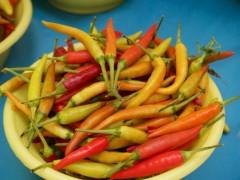 Thai Chilies