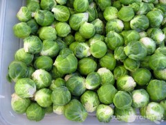 Baby Brussels Sprouts