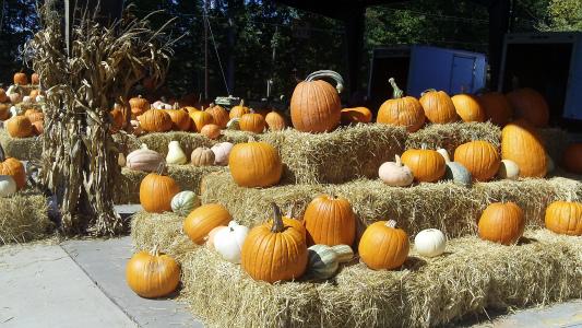 Charlotte Farmers Market Pumpkins