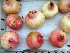 White Pomegranates