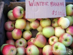 Winter Banana Apples