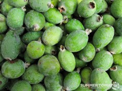 Pineapple Guava