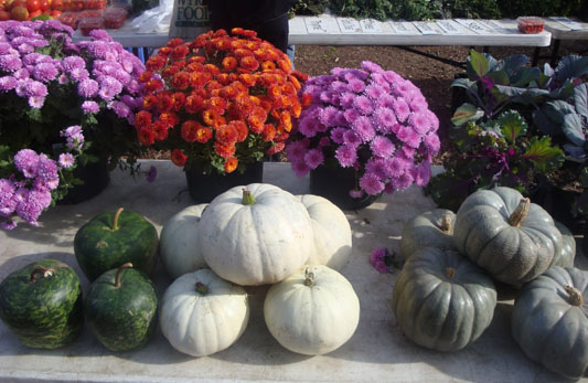 mums and pretty pumpkins