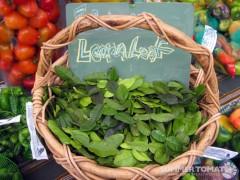 Lemon/Lime Leaf