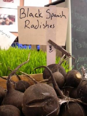 Garden to Be Black Spanish Radishes