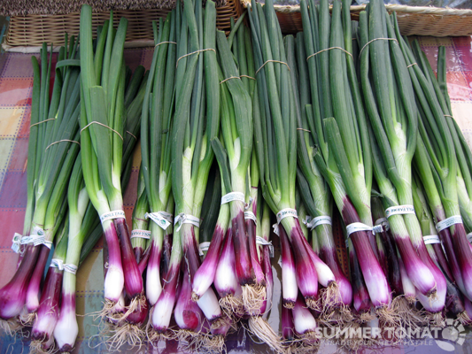 Lovely Spring Onions