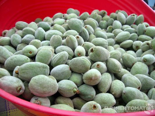 Green Almonds