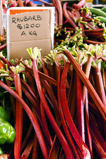 how to grow rhubarb in perth