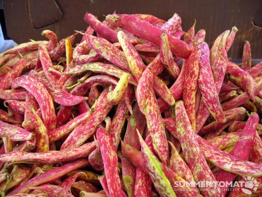 Cranberry Shelling Beans