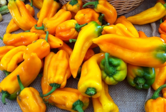 Golden Treasure Peppers
