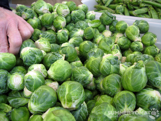 Early Brussels Sprouts