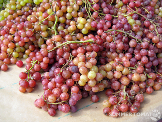 Flame Grapes
