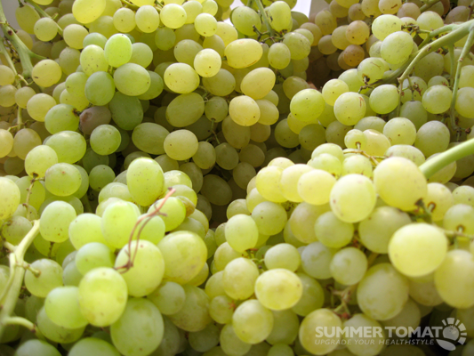 Thompson Grapes