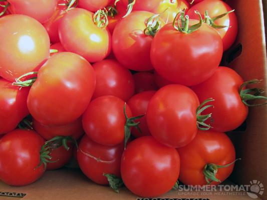 February Tomatoes