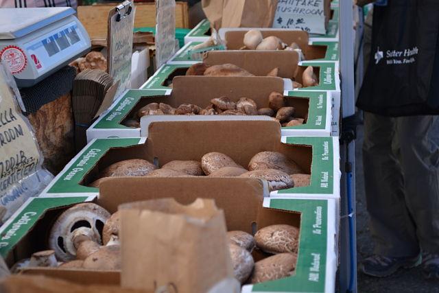 Rows of Mushrooms
