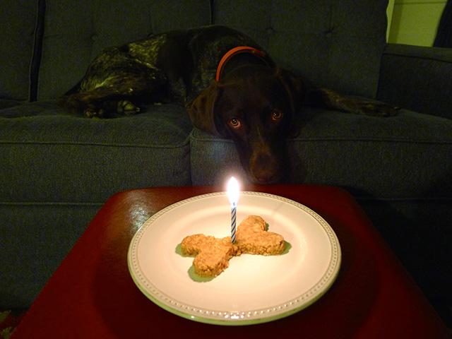 Huck's first birthday wish
